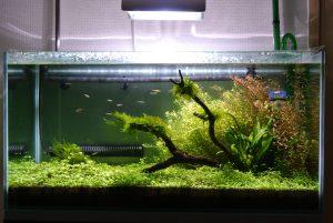 Les meilleurs chauffage d'aquarium en 2021