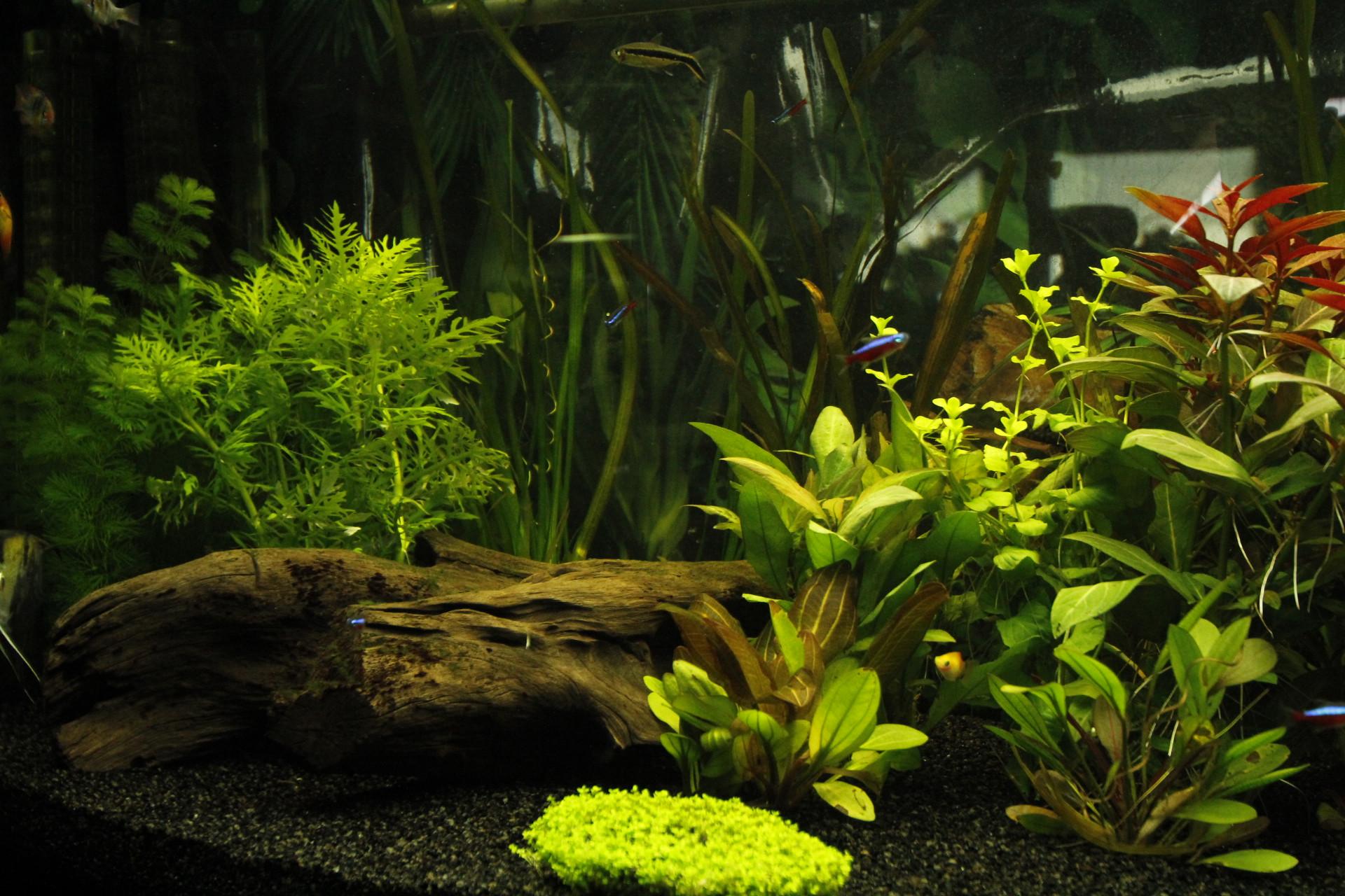 Les meilleurs filtres d'aquarium de 2021