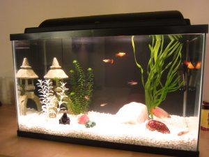 Les meilleurs éclairages d'aquarium en 2021