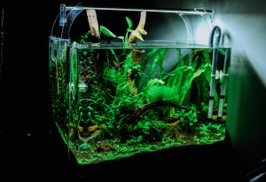 Les meilleures pompes d'aquarium de 2021