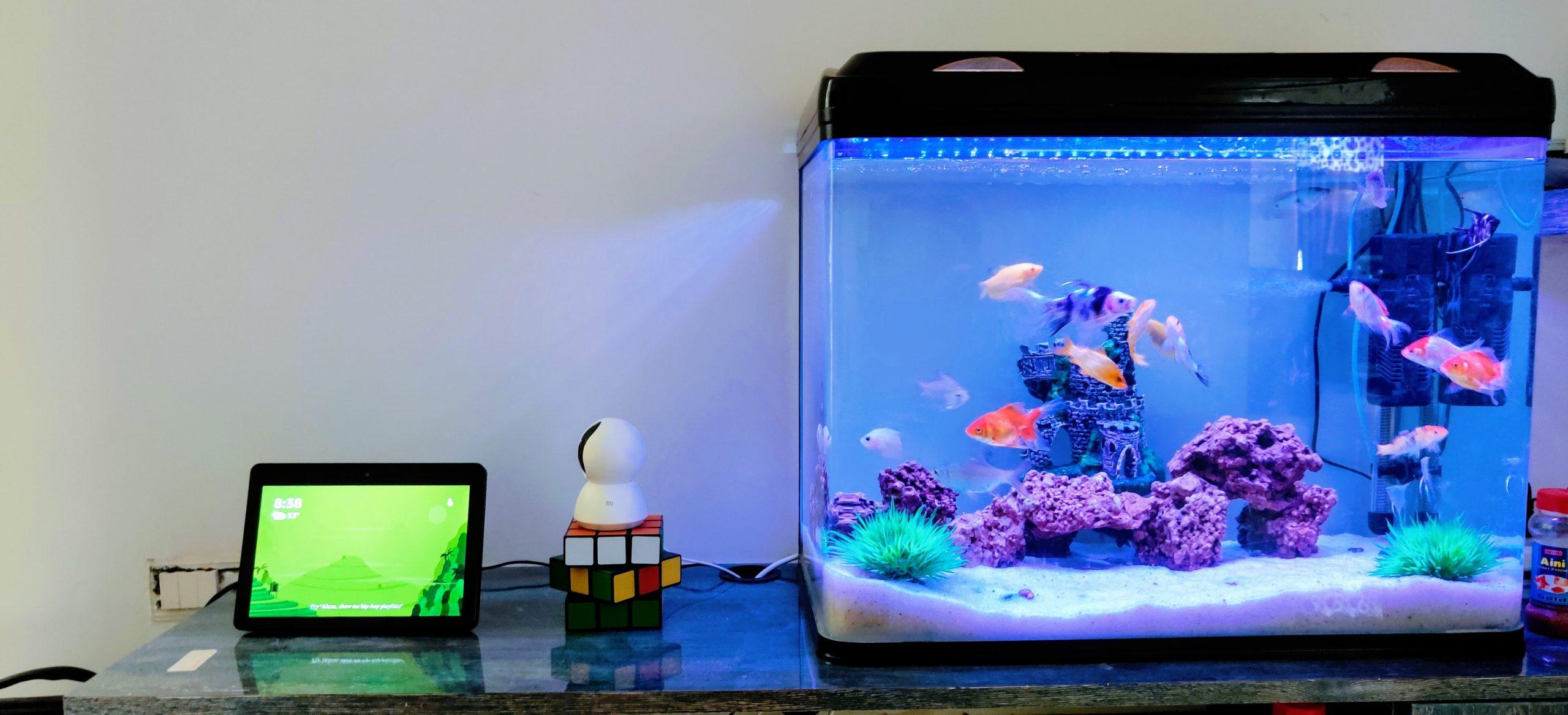 Meilleurs conseils pour l'entretien de votre aquarium: tests et produits